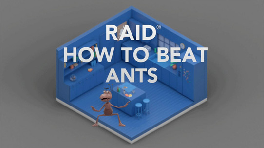 How to Beat Ants